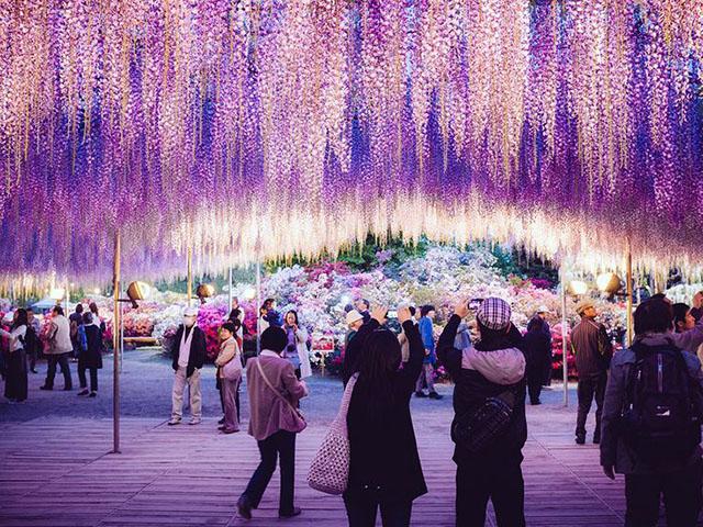 Chiêm ngưỡng giàn hoa bước ra từ cổ tích ở Nhật